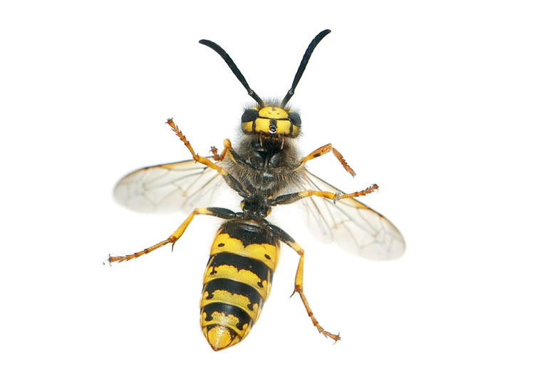 Wasp Control Homes Chapel 24/7, same day service, fixed price no extra!